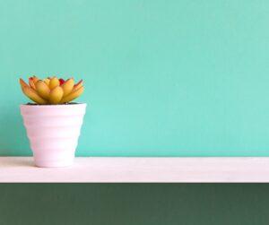 vaso di cactus su una mensola