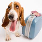 cane con valigia e passaporto